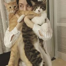 「石田ゆり子 猫」の画像検索結果